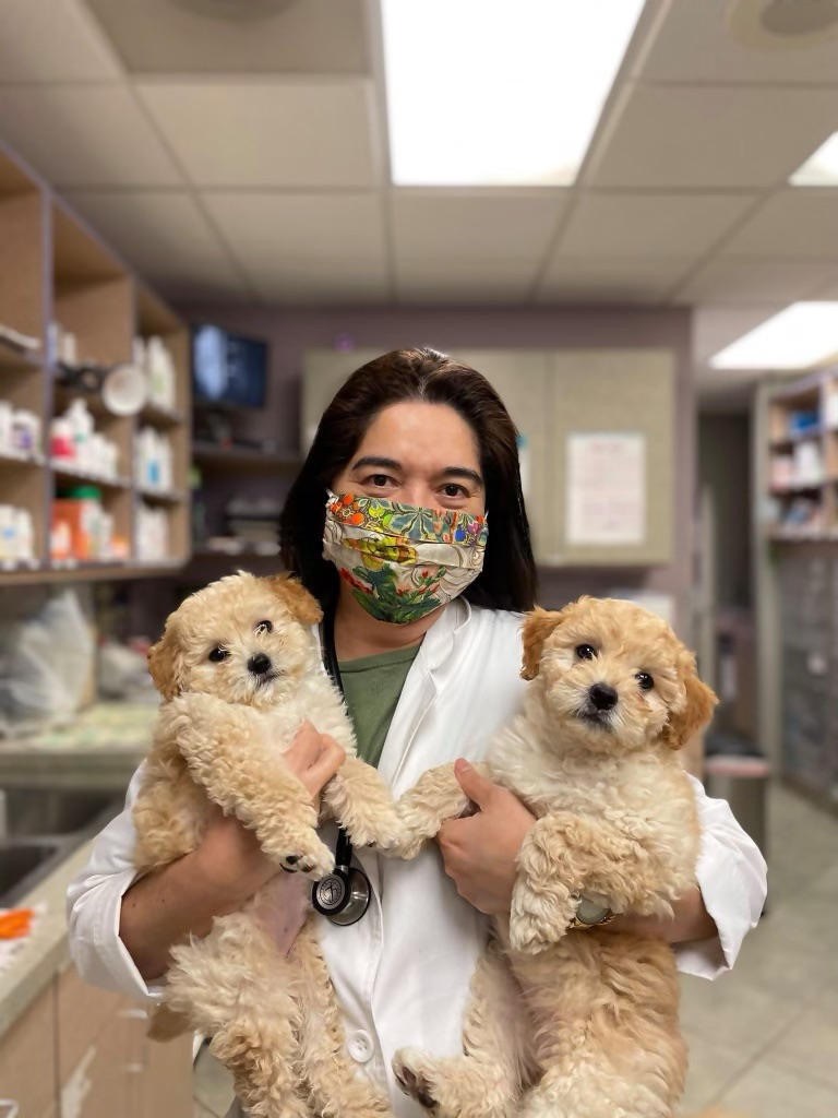 Veterinarian in Simi Valley, CA