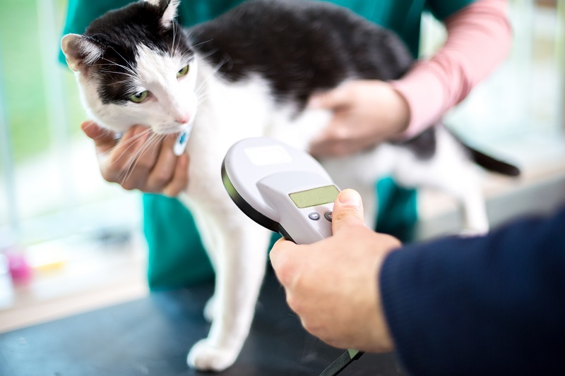 Microchipping Simi Valley, CA